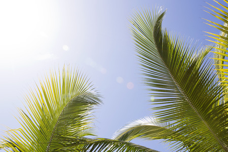 Beautiful palm trees in Africa with blue sky
