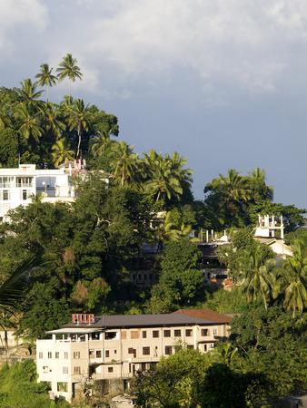 kandy: Beautiful palm landscape in the mountains of Kandy, Sri Lanka