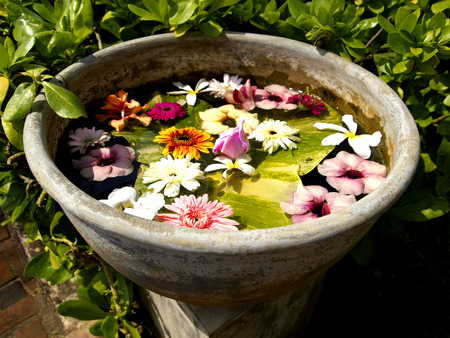 Beautiful colored flowers in a flowerpot in Asia