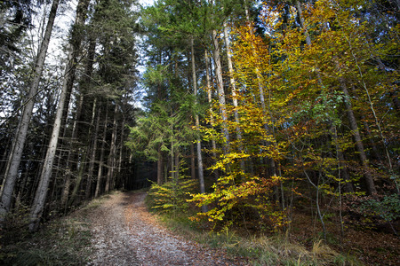 Sunny autumnal forest in Bavaria, Germany photo