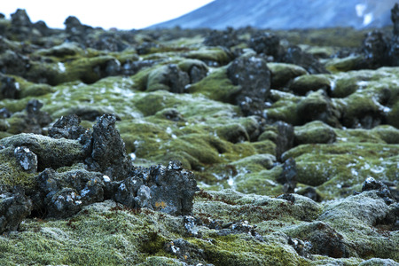 Durable green moss on volcanic rocks in Iceland Stock Photo