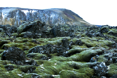 Resistant green moss on volcanic rocks in Iceland Stock Photo