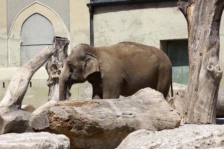 tierschutz: Portrait eines alten Elefanten zwischen Steinen und B�umen