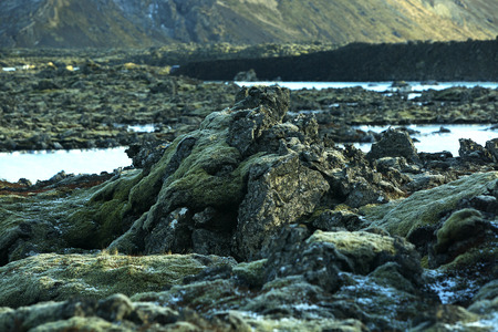 resistant: Resistant green moss on volcanic rocks in Iceland Stock Photo