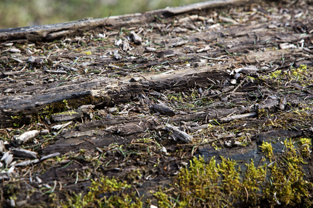 barque: Closeup of the surface of a felled tree Stock Photo