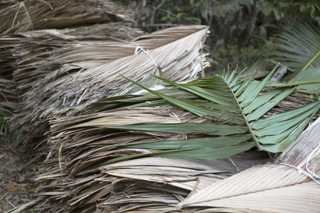 Dried palm tree leaves at the wayside, Seychelles Stock Photo