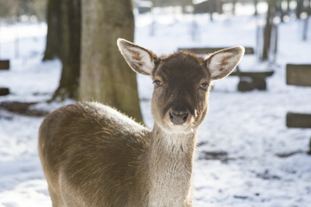 Portrait of a roe deer in the sunlight