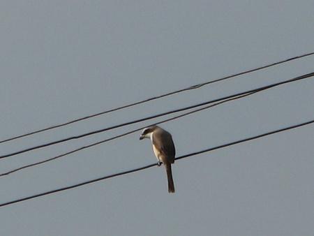 encroach: Migratory bird Stock Photo