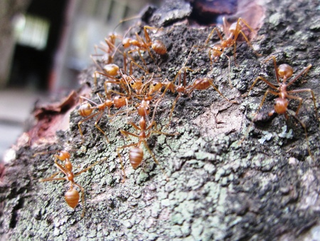 Ants converging