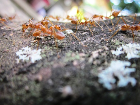 Ants on parade  Stock Photo - 13039441