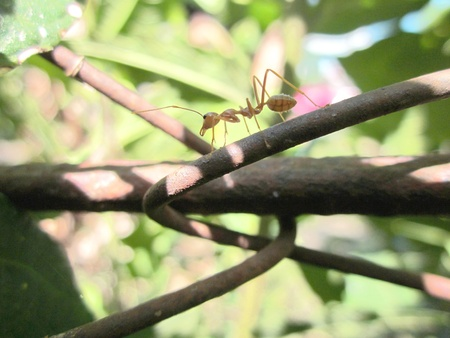 forage: Ant on the forage