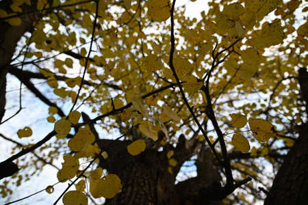 Just a beautiful yellowness of autumn Archivio Fotografico