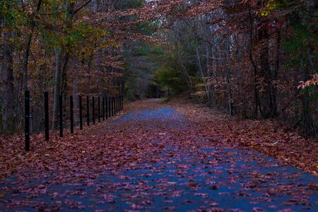 This is An Image of Fall Leaves on a Trail