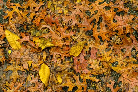 This is a Image of Fall Leaves in a Pile