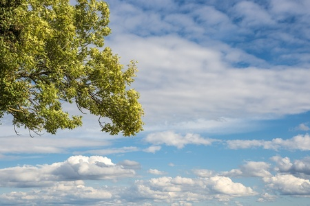 Part of a green tree with clouds on blue sky Stock Photo