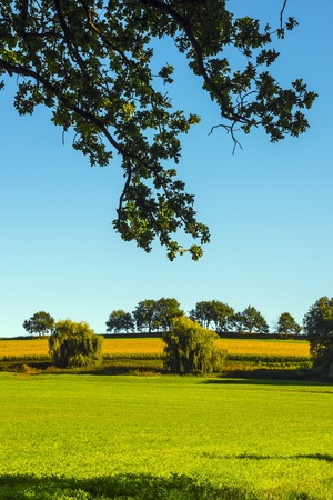 Landscape with green grasland in the near of Aichach, a small town in Bavaria Germany photo