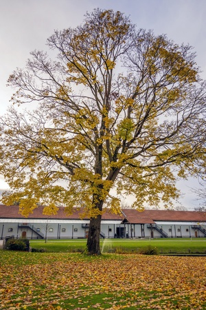 tree in autumn with colored leaves and building in background Stock Photo - 16240019