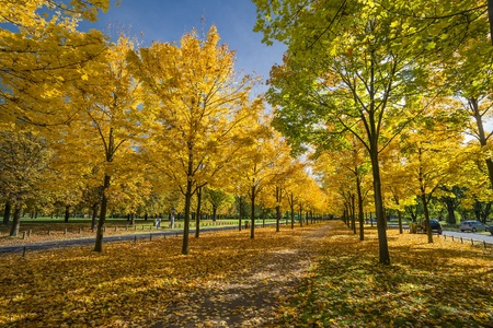 Trees with colorful leaves in a small park in Dresden in the autumn photo
