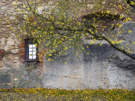 Boom met gele bladeren in de voorkant van een oude muur met bakstenen en raam in de herfst
