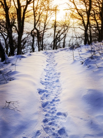 Footprints in the snow of a winter landscape in a forest with evening mood photo
