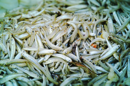 Close-up of a large number of gray and silver anchovies