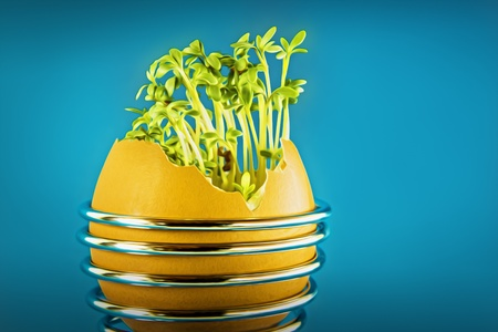 eggshell with cress and blue background photo