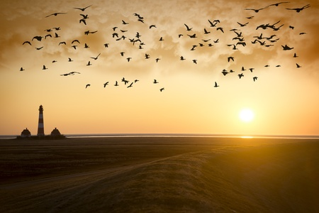 Sunset at Lighthouse Westerhever with migratory birds on the North Sea in Germany photo