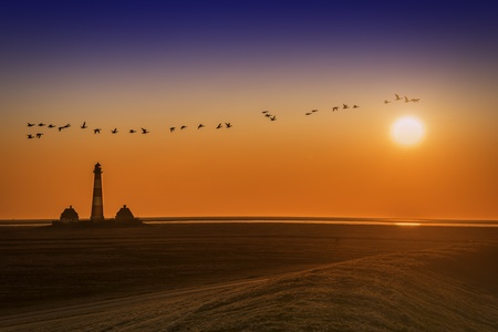 Lighthouse at sunset with flock of birds photo