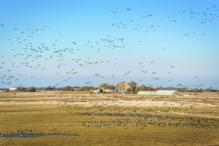 german north sea region: Flock of Gulls over a landscape with a house and a small lake on the North Sea