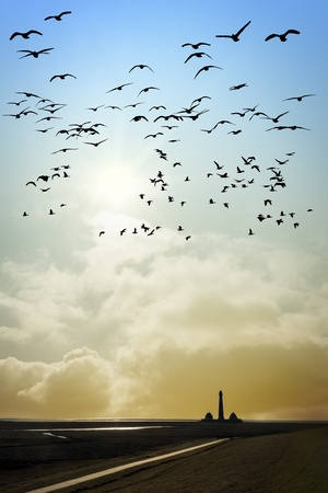 Lighthouse in Westerhever at the evening sunset with sun and birds photo