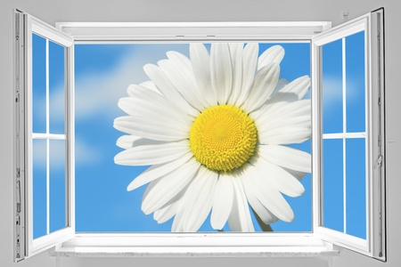 View through a white open window to a big marguerite on blue sky photo