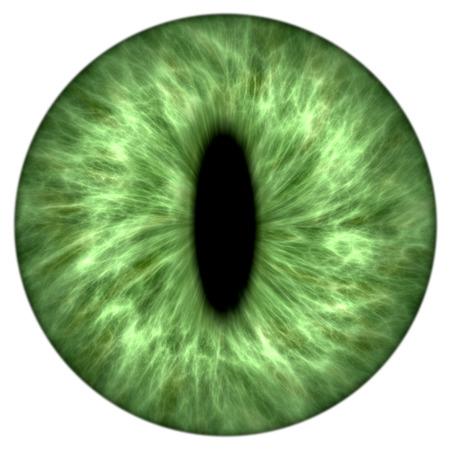 Illustration of a green animal iris