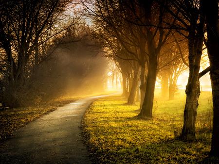 Afbeelding van een pad met bomen, weiden en zonnestralen