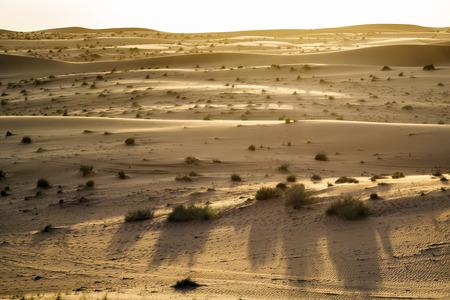 Evening mood in desert Wahiba in Oman Stock Photo