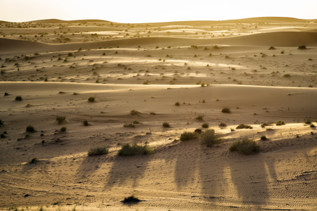 Evening mood in desert Wahiba in Oman Stock fotó - 28260573