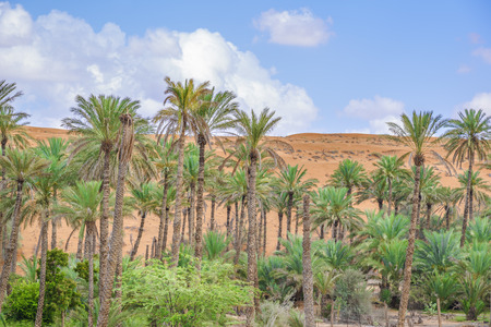 Image of oasis Al Haway in Oman with green palms and plants, sand dune and blue sky photo