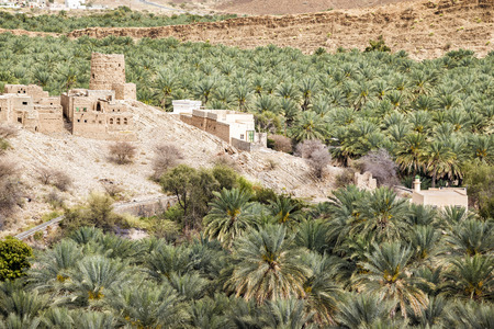 Image palms and ruins in Birkat al mud in Oman
