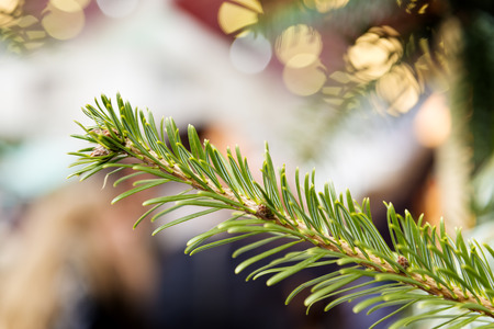 conifer: Picture of a branch of a conifer on a Christmas market