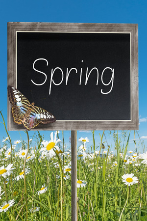 margarite: Blank chalkboard on a meadow with text Spring Stock Photo