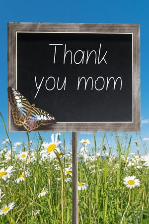 margarite: Blank chalkboard on a meadow with text Thank you mom Stock Photo