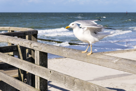 gaviota: Sentado gaviota en la playa del mar Báltico en Alemania Foto de archivo