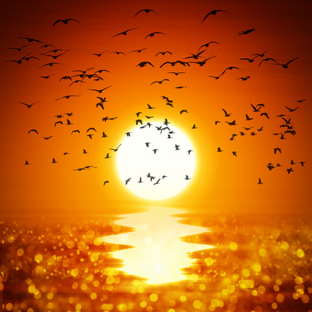 orange sunset: Illustration of a yellow orange sunset with ocean and birds