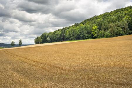 wheatfield: Image of a wheatfield in Franconia, Germany