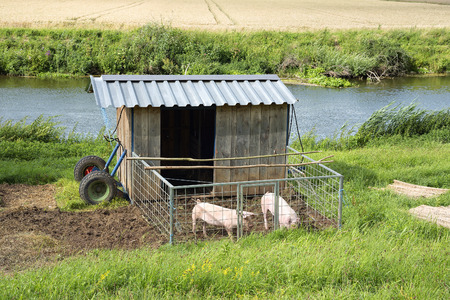 pigpen: Image of two lovely pigs with a small shed