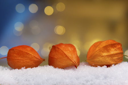 artificial lights: Image of physalis plant on artificial snow and bokeh lights with free space in background