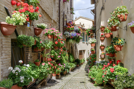 spello: Side street with flowers in the town of Spello in Umbria, Italy