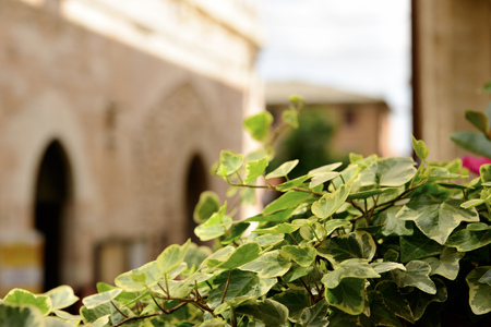 spello: Image of plant in a public street in Spello, Italy, Umbria Stock Photo
