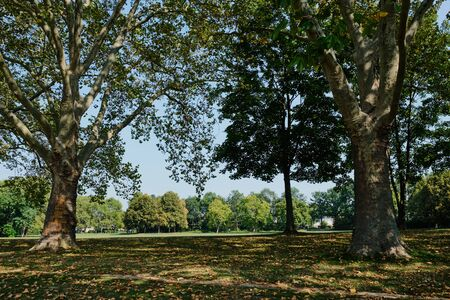 Image of parks with trees and green  meadows Bonn, Germany on a sunny day Stock fotó