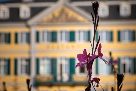 Image of a plant with old post office in Bonn in background in Germany