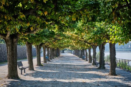 Bank of Rhine with river and trees in Bonn, Germany